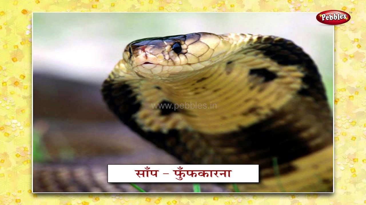 Extinct Animals Names Hindi