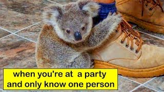 Hilarious Memes That Will Make Every Introvert Laugh Out Loud 😂