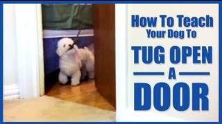 How To Teach Your Dog To Tug Open A Door