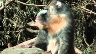La vie privée des animaux de Patrick Bouchitey - Episode 15