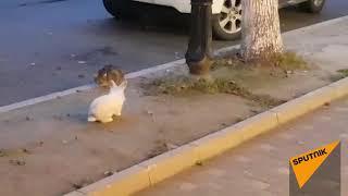 Как кролик к сухумскому коту приставал