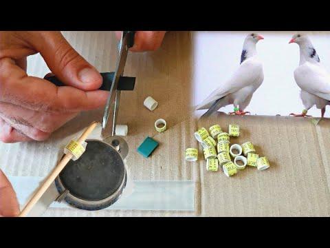 Кольца для голубей именные и маркерные. Легко и просто!!! Personalized And Marker Rings For Pigeons
