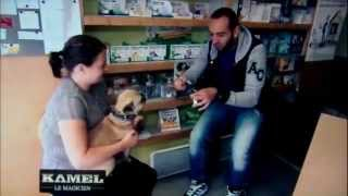 Kamel Le Magicien - Veterinaire