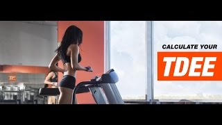 TDEE Calculator   Total Daily Energy Expenditure   Tiger Fitness