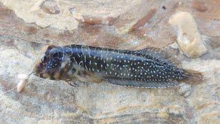 Что это что за рыба на Чёрном море никто не знает What is it Рыбалка на Чёрном море с берега
