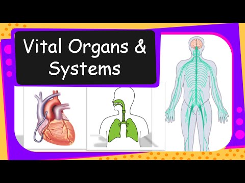 Science Human Vital Organs And Systems Overview