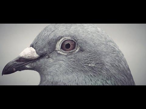 Histibe - Third Millennium (Official Video)