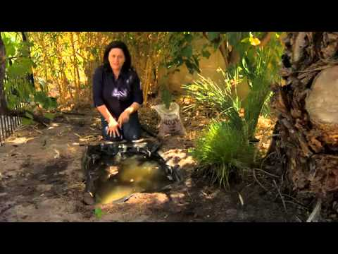 The Garden Gurus - Build a frogpond for under $100<a href='/yt-w/VrVCPUhRLDo/the-garden-gurus-build-a-frogpond-for-under-100.html' target='_blank' title='Play' onclick='reloadPage();'>   <span class='button' style='color: #fff'> Watch Video</a></span>