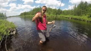 bwca mayfly hatch walleye