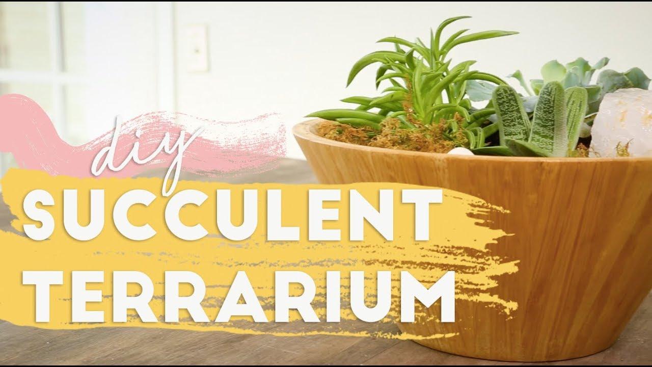 Easy Diy Succulent Terrarium Feat Pollen Nation Youtube