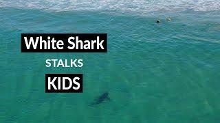 WHITE SHARK STALKS KIDS - Shark Drone Footage