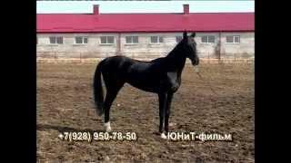 Лошади Ахалтекинской породы(http://unit-film.ru/ Образец., 2013-11-14T06:44:19.000Z)