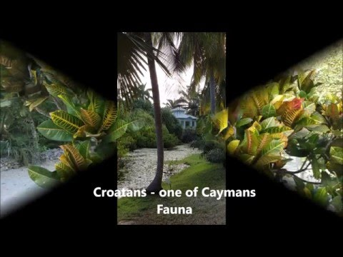 Visting Cayman Islands?