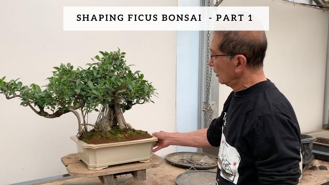 Watering Feeding Bonsai Trees Youtube