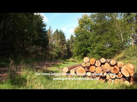 Haugh Woods - Hereford Walks