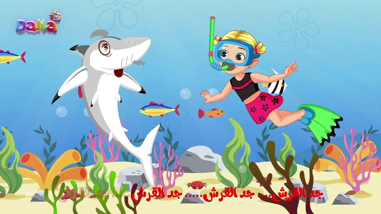 اغنية طفل القرش فيديو جديد
