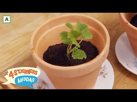 4-stjerners Middag   Serverer potteplante til dessert   TVNorge
