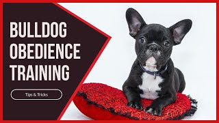 Bulldog Obedience Training - Tips & Tricks