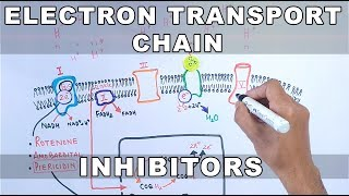 Inhibitors of Electron Transport Chain