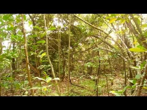 ต่อไก่ป่า 2015 (2)