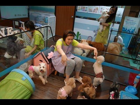88 PETS MART [PET HOTEL] 宠物酒店 (Petaling Jaya, Malaysia)
