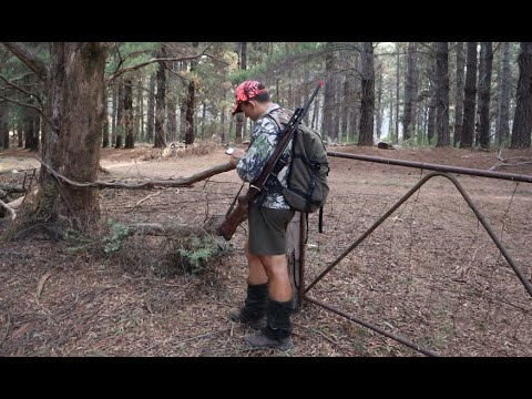 2020 NSW State Forest Hunting - Quest For A Deer Part 2