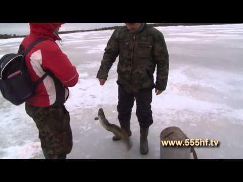 рыбалка налима на онежском озере