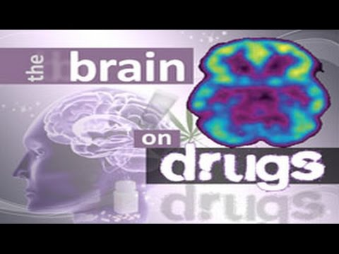 The Brain on Drugs Part 1