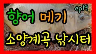 서울근교 민물낚시터 추천시리즈 ep19 carp fis…