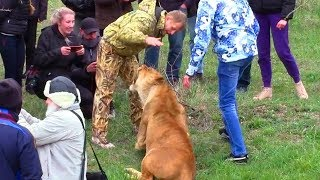 Опасные Игры со Львами. Битва Львов. Крым. Парк Львов Тайган