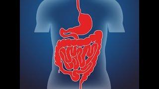 Причины болезней желудочно-кишечного тракта (фрагмент лекции)