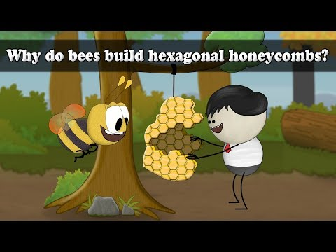 Why do bees build hexagonal honeycombs? | #aumsum #kids #science #education #children