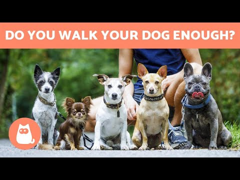 How Often Should You WALK YOUR DOG Daily Exercise Tips