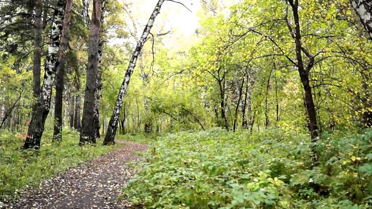 фотографии в осеннем лесу