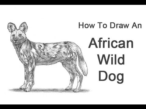 How to Draw an African Wild Dog