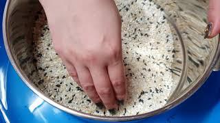 바그미. 쌀벌레 퇴치 이렇게 해봤더니....ㄷㄷㄷ