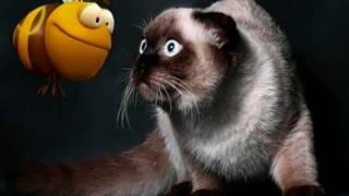 Коты за Здоровый Образ Жизни(http://OriWellness.ucoz.ru/ Каждый знает поговорку «Береги здоровье смолоду», но не каждый ею пользуется. До старости..., 2011-11-22T20:36:51.000Z)