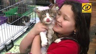 Спасти бездомных кошек от смерти на морозе пытаются волонтёры в Подмосковье