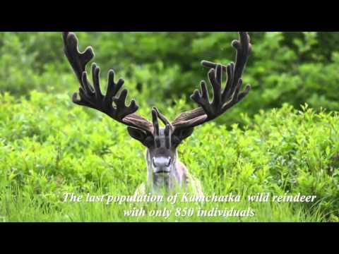Russia: Kronotsky Nature Reserve