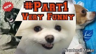 #Part1 !! Best of the best !! Very funny animals!! #Trending