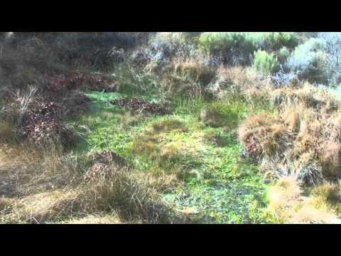 Borrego Springs: pena spring