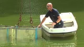 Proef tegen Blauwalg in  Groenlo