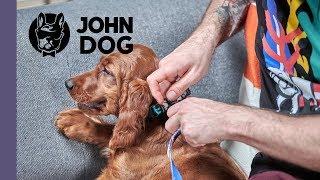 Pierwsze zakładanie obroży, szelek i smyczy – TRENING – John Dog