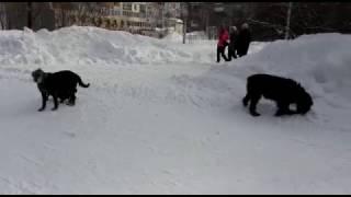 Собаки в сквере Сибиряков-Гвардейцев