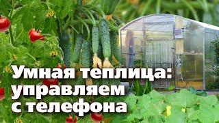 В ЭТОЙ ТЕПЛИЦЕ ВАМ НУЖНО БУДЕТ ТОЛЬКО СОБИРАТЬ УРОЖАЙ.  Отличный вариант для работающих садоводов