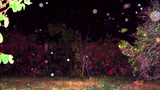 "Spirit orbs/April 25 2014/Moon,Planet Mars, Roll Models ""Fog is So Real""X5"