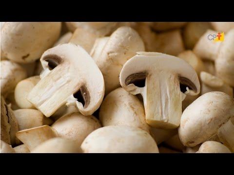 Clique e veja o vídeo Curso a Distância Cultivo do Cogumelo Champignon
