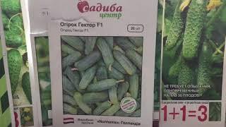Эти семена высокоурожайных огурцов посею обязательно. (Часть3)