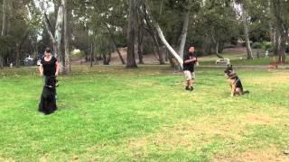 Best Dog Training In Orange County - Falco K9 Academy