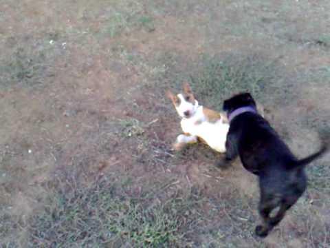 Mini pets animal dating cheats